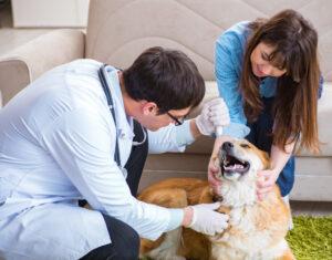 Vétérinaire : tout sur le déroulement d'une visite à domicile
